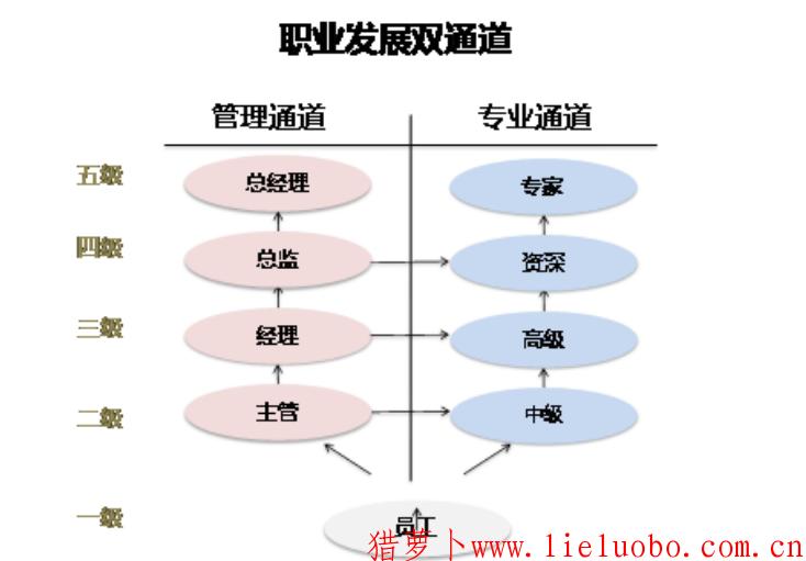 员工系统的职业生涯规划包括哪些内容?